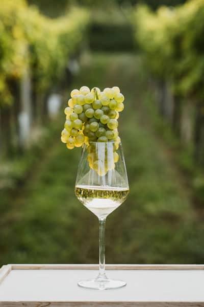 Tempus vino